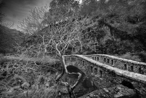 bridge and tree in alum rock park