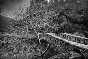bridge and tree in alum rock park